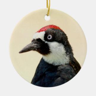 Acorn Woodpecker Portrait Round Ceramic Decoration