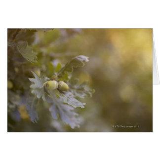Acorns on oak tree. greeting card