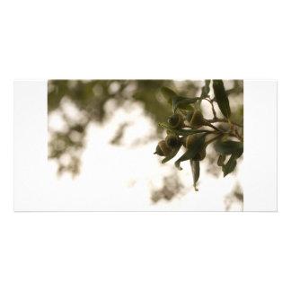 Acorns Photo Cards