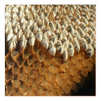 Acrylic Art - Dried Sunflower Head