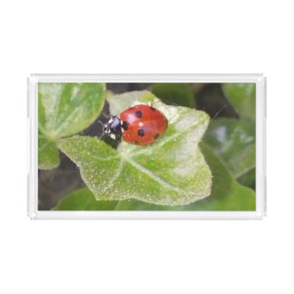 Acrylic tray with ladybird