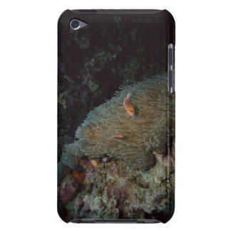 Actinia Barely There iPod Case
