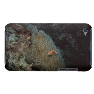 Actinia iPod Touch Case