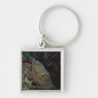 Actinia Silver-Colored Square Key Ring