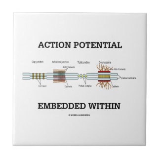 Action Potential Embedded Within (Cell Junctions) Tile