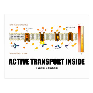 Active Transport Inside (Sodium-Potassium Pump) Postcards