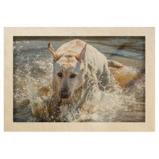 Active Yellow Labrador Splashing: Pet Photography Wood Poster