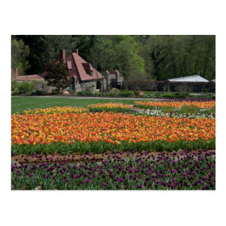 Acupuncture in the Tulips Postcard