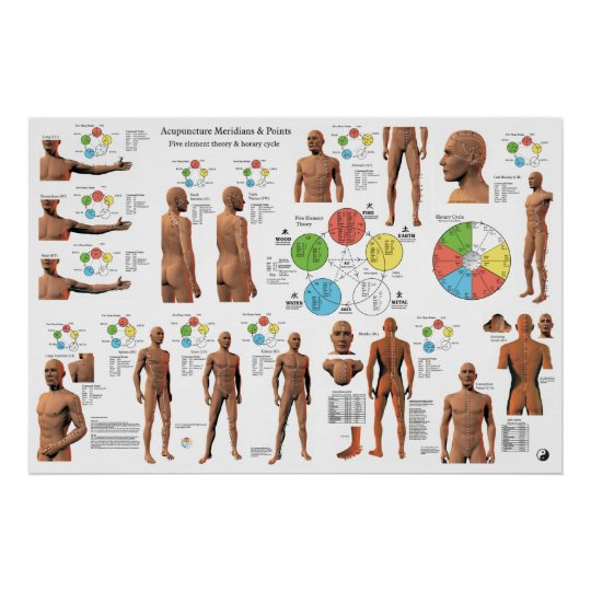 Acupuncture Meridian Points and Pathways Poster