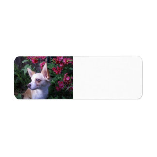 """Add Your Own Photo"" Label Return Address Label"