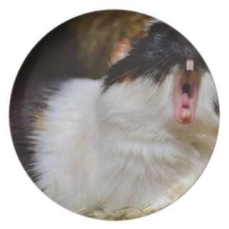 Add Your Own Text Funny Guinea Pig Dinner Plates