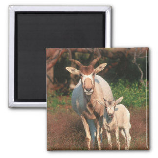 Addax / White Antelope / Screwhorne Antelope Fridge Magnet