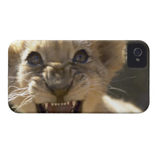 Addo Elephant National Park, Eastern Cape Case-Mate iPhone 4 Case
