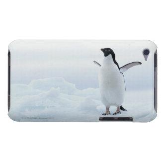 Adelie penguin, Antarctica iPod Case-Mate Case