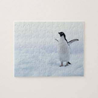Adelie penguin, Antarctica Jigsaw Puzzle
