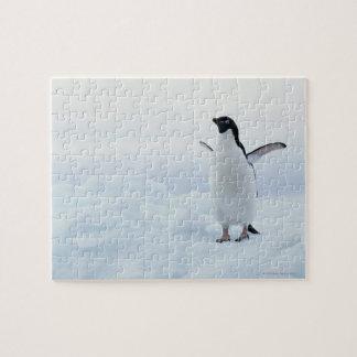 Adelie penguin, Antarctica Puzzle