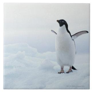 Adelie penguin, Antarctica Tile