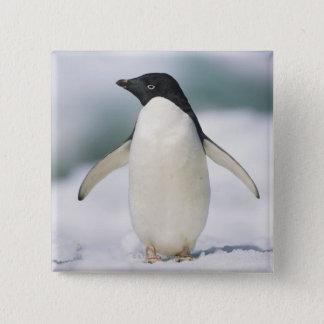 Adelie penguin, close-up 15 cm square badge