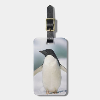 Adelie penguin, close-up luggage tag
