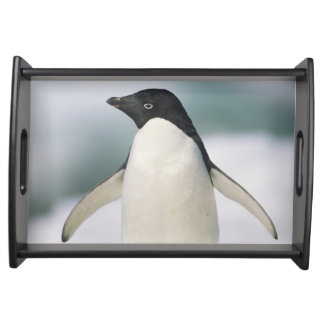 Adelie penguin, close-up serving tray