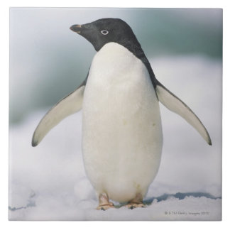 Adelie penguin, close-up tile