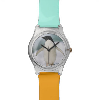 Adelie penguin, close-up wristwatches