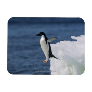 Adelie penguin leaping from iceberg magnet