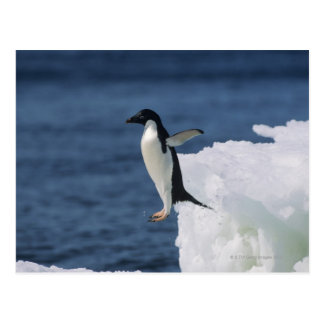 Adelie penguin leaping from iceberg postcard
