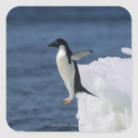 Adelie penguin leaping from iceberg square stickers