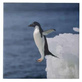 Adelie penguin leaping from iceberg tile