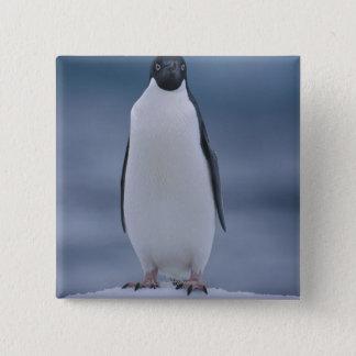 Adelie Penguin on Ice 15 Cm Square Badge