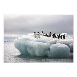 Adelie Penguin Pygoscelis adeliae), Art Photo