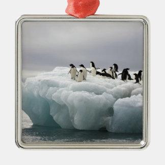 Adelie Penguin Pygoscelis adeliae), Christmas Ornament
