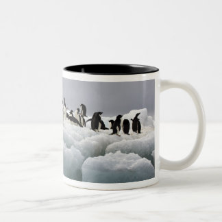 Adelie Penguin Pygoscelis adeliae), Two-Tone Coffee Mug