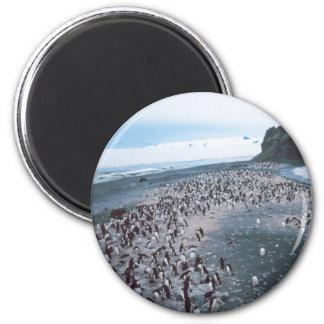Adelie Penguins 6 Cm Round Magnet