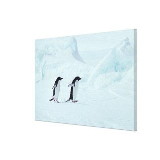 Adelie Penguins, Antarctica Canvas Print
