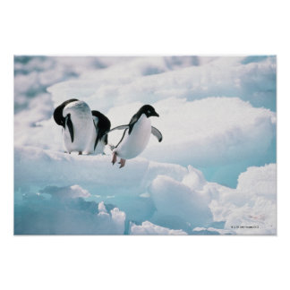 Adelie Penguins | Antarctica Poster