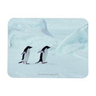 Adelie Penguins, Antarctica Rectangular Photo Magnet