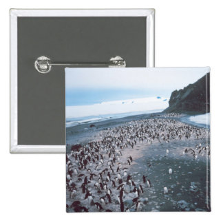 Adelie Penguins Pinback Buttons
