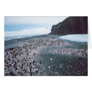 Adelie Penguins Greeting Card