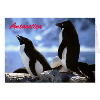 Adelie Penguins in Antarctica Greetings Card