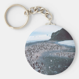 Adelie Penguins Basic Round Button Key Ring