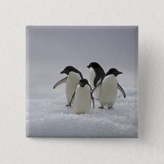 Adelie Penguins on Ice Flows 15 Cm Square Badge