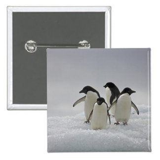 Adelie Penguins on Ice Flows 15 Cm Square Badge