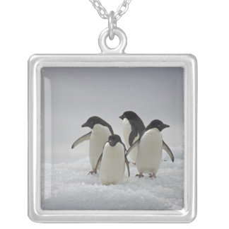 Adelie Penguins on Ice Flows Silver Plated Necklace