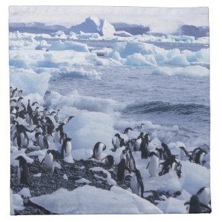 Adelie Penguins Pygoscelis adeliae) among the Napkin