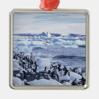 Adelie Penguins Pygoscelis adeliae) among the Silver-Colored Square Decoration