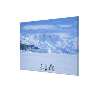 Adelie Penguins, Pygoscelis adeliae), Canvas Print