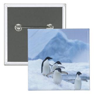 Adelie Penguins (Pygoscelis adeliae) on ice, 15 Cm Square Badge