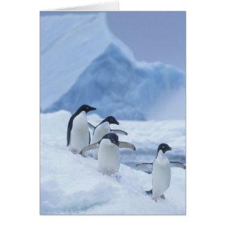 Adelie Penguins (Pygoscelis adeliae) on ice, Greeting Card
